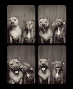 Desparpajo canino en los fotomatones, ▷ Alquiler Fotomatón en Madrid